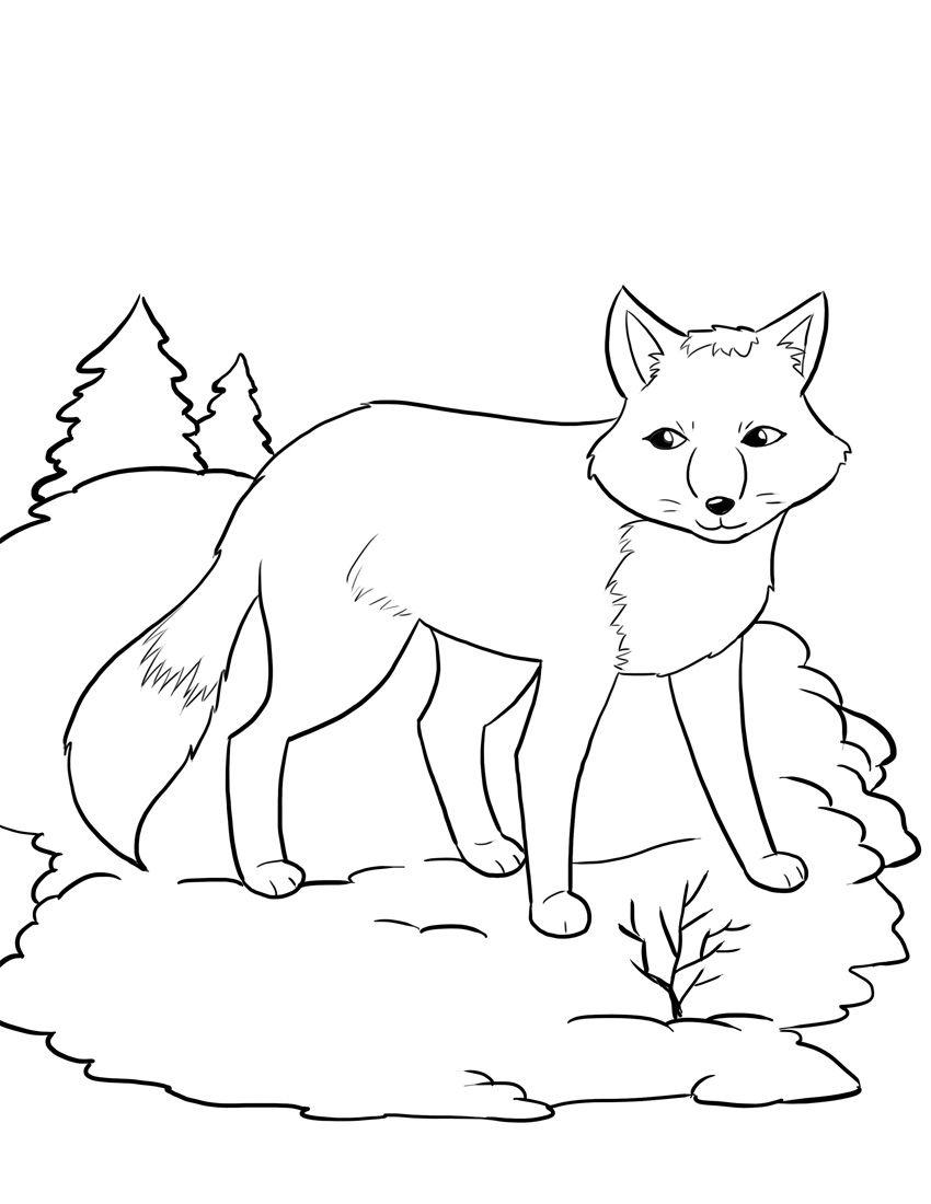 arctic fox coloring page # 2