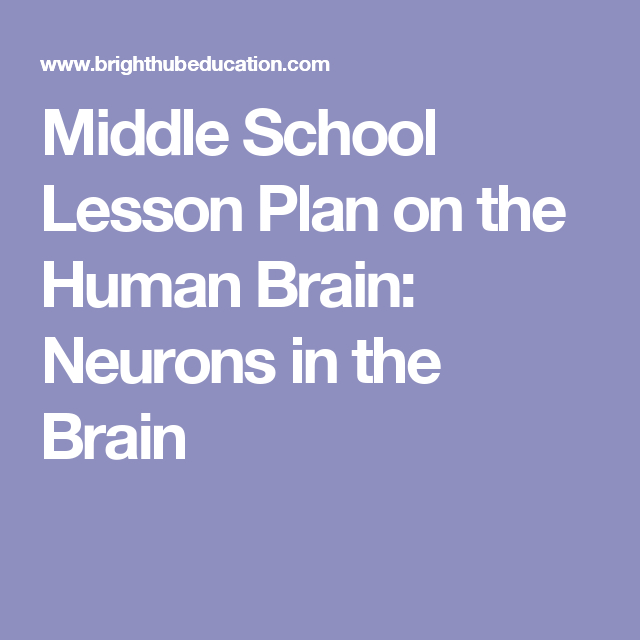 Middle School Lesson Plan on the Human Brain: Neurons in the