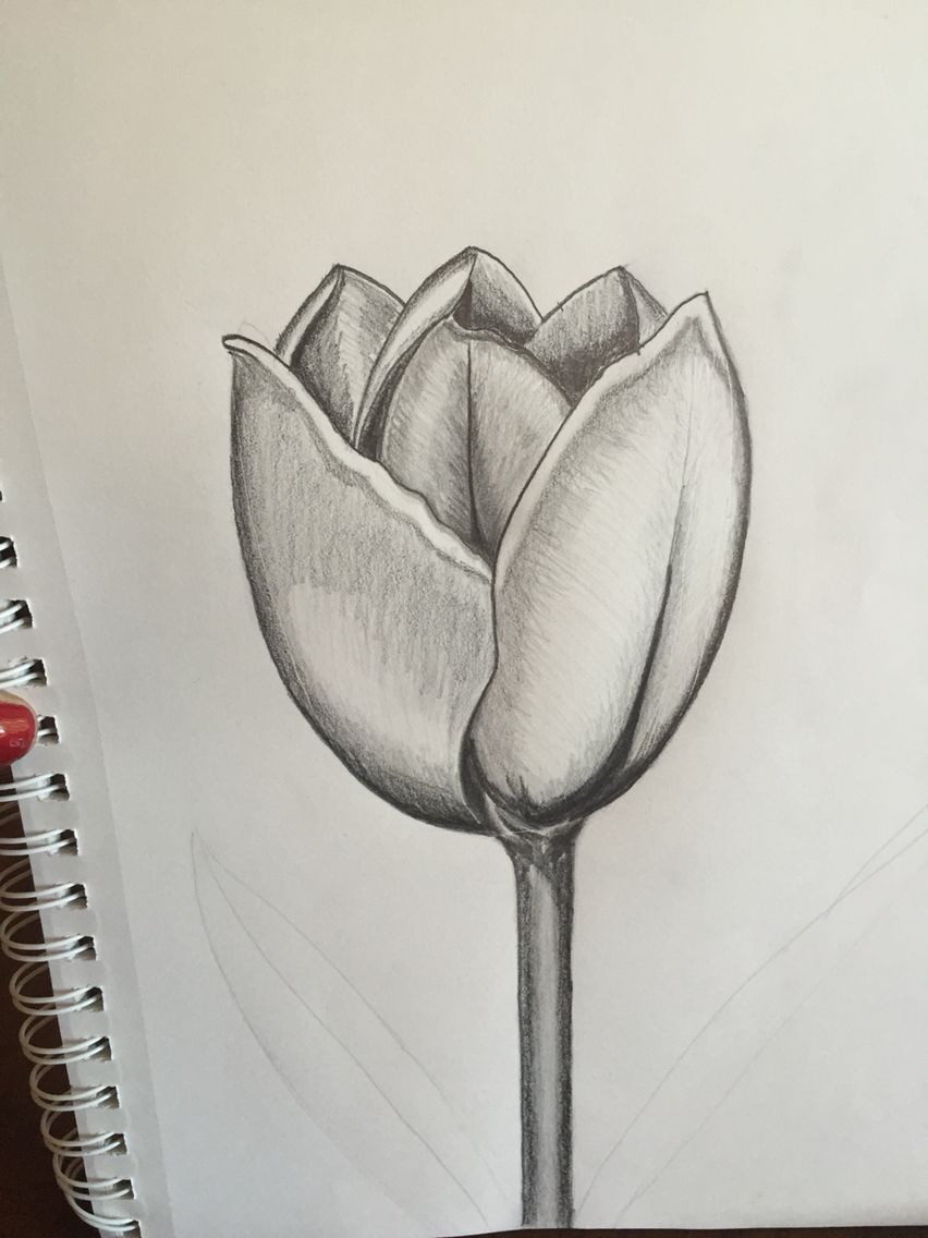 tulip sketch brittany starzak my arts crafts projects in 2018