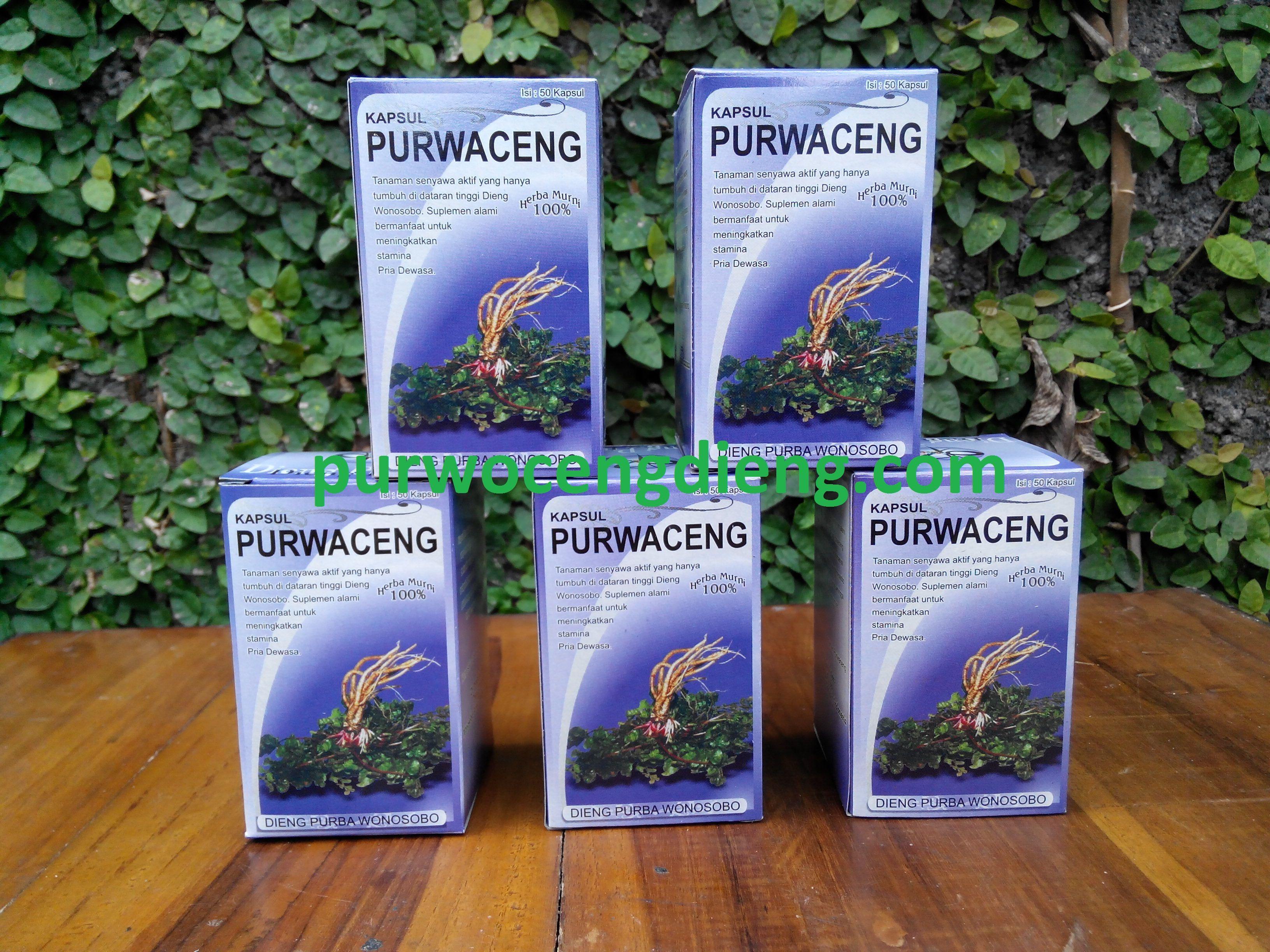 purwoceng kapsul obat herbal perkasa alami jual obat kuat herbal
