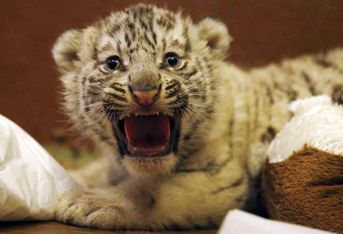 109 Best Animals Images On Pinterest: Best 25+ Animal Tracks Ideas On Pinterest