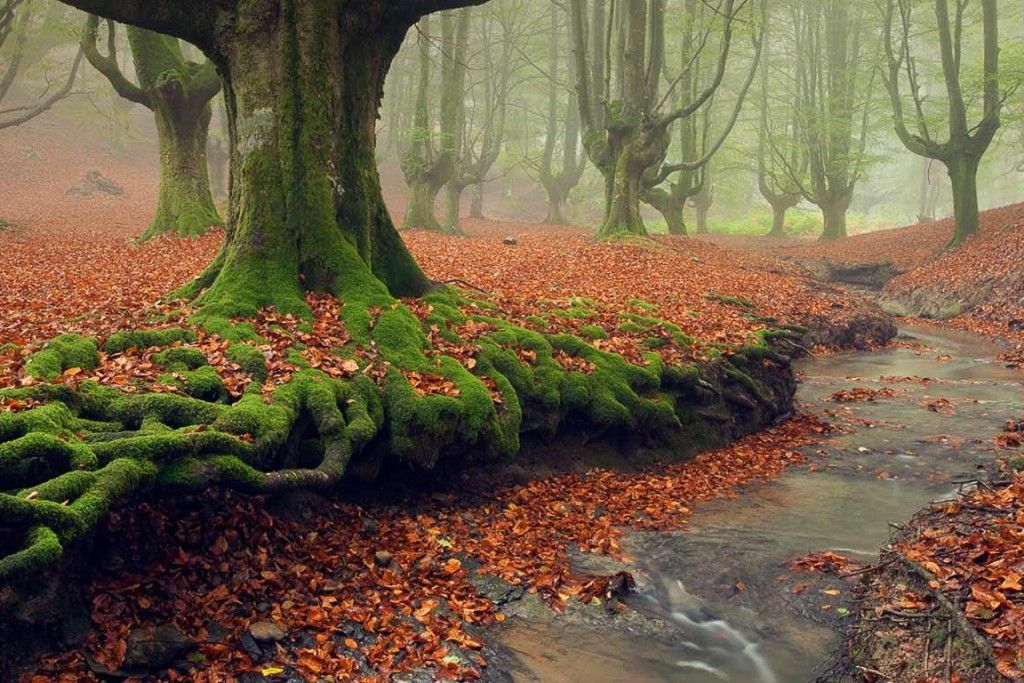 12 Of The Most Mysterious Forests In The World Landscaping Around Trees Mystical Forest Weird Trees