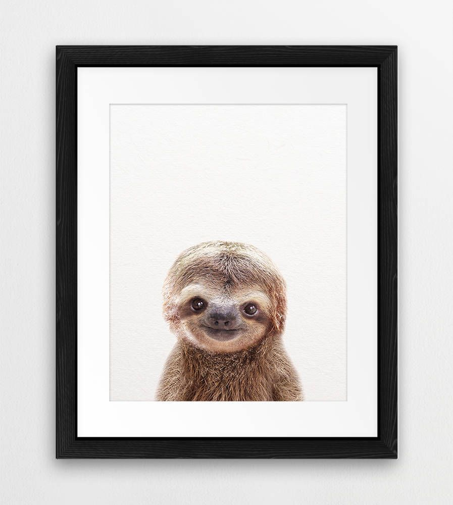 Sloth Animals art Nursery decor Animal nursery art Cute baby animals