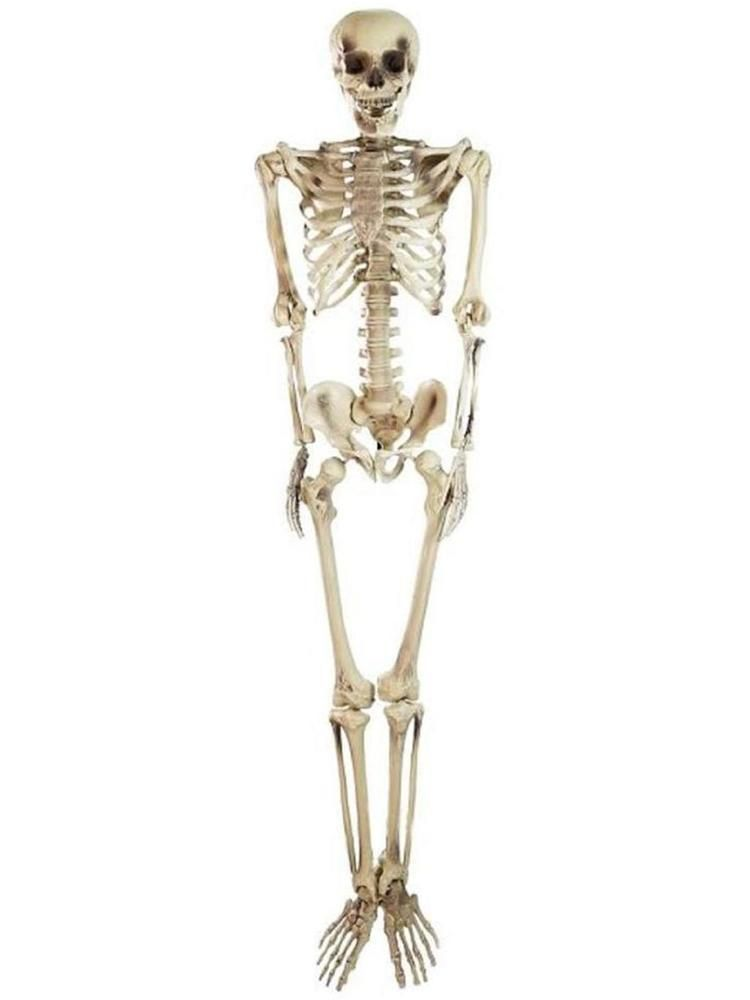 Spooky Life Size Skeleton Indoor/Outdoor Halloween Decoration - life size halloween decorations