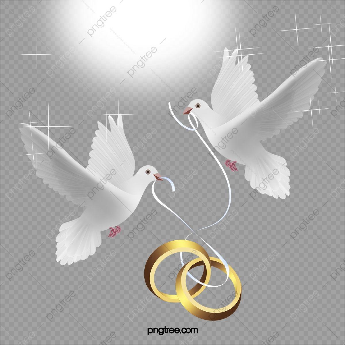 ناقلات خاتم الزواج عالية الدقة جميلة حمامة Png وملف Psd للتحميل مجانا In 2021 Clip Art Vector Wedding Rings