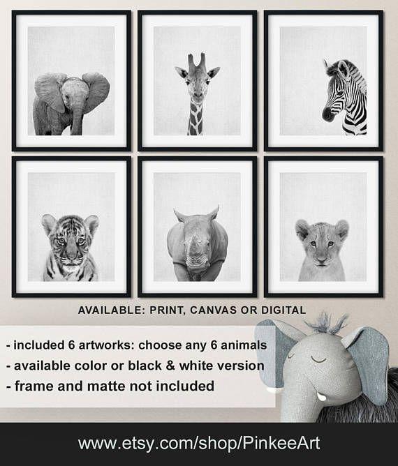 Black And White Photos Of Animals