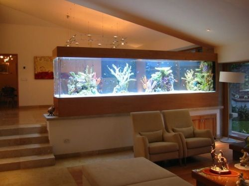 Un acuario en casa ideas para decorar casa pinterest - Peceras para casa ...