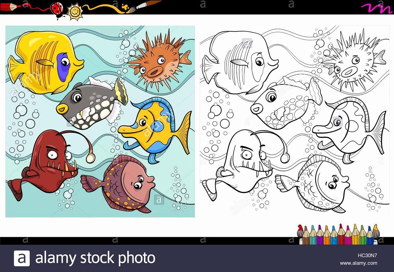 Coloring Book Cartoon Characters Beautiful Cartoon Illustration Of Fish Sea Life Animal Characters Tiere