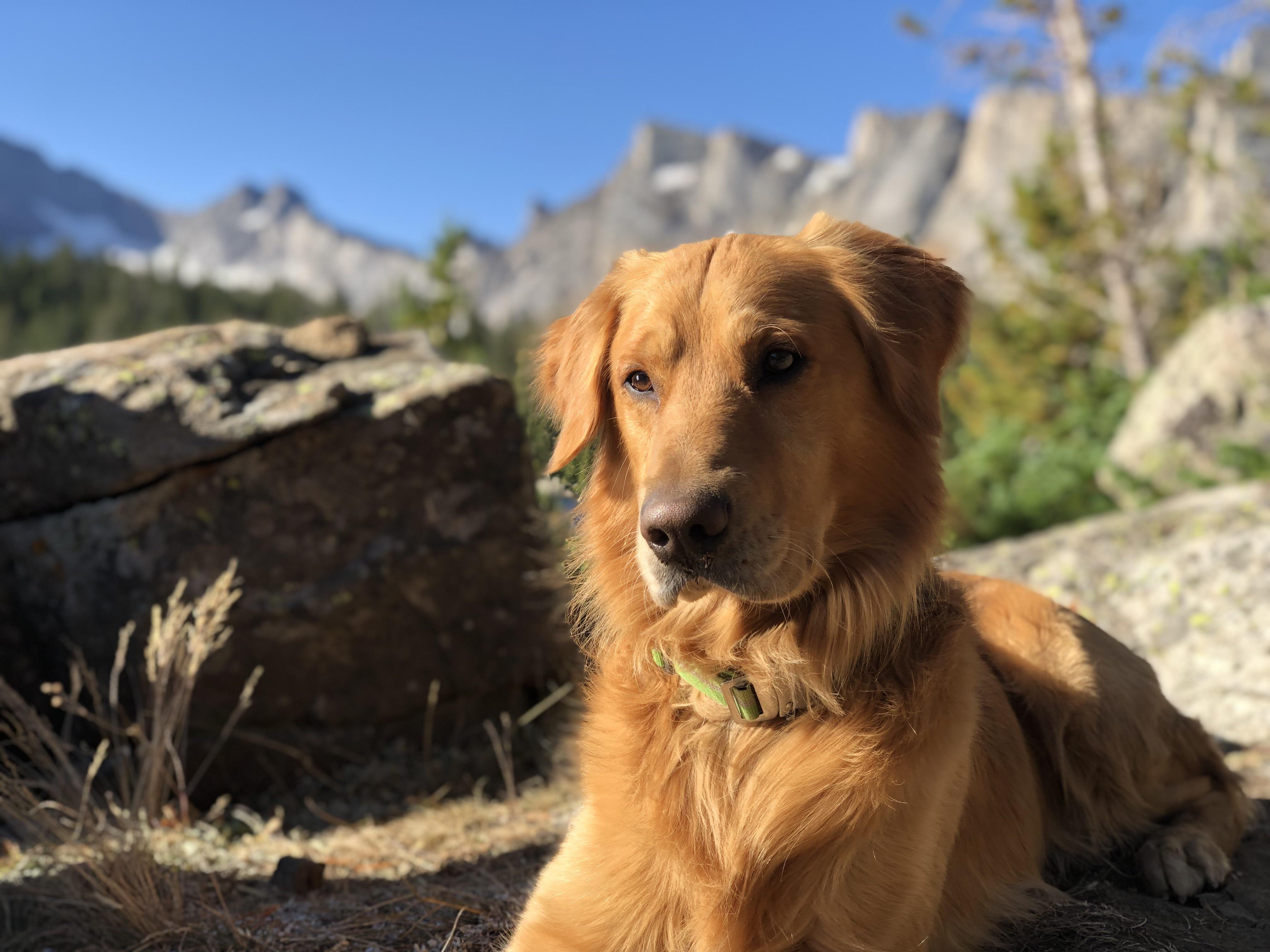 Dis Max. He like mountains. #goldenretriever | Golden