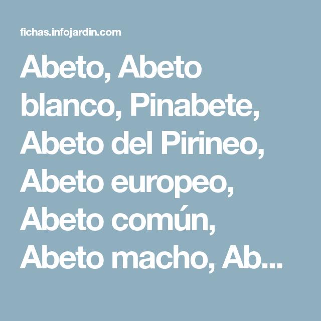 Abeto, Abeto blanco, Pinabete, Abeto del Pirineo, Abeto europeo, Abeto común, Abeto macho, Abetuna. - INFOJARDIN.