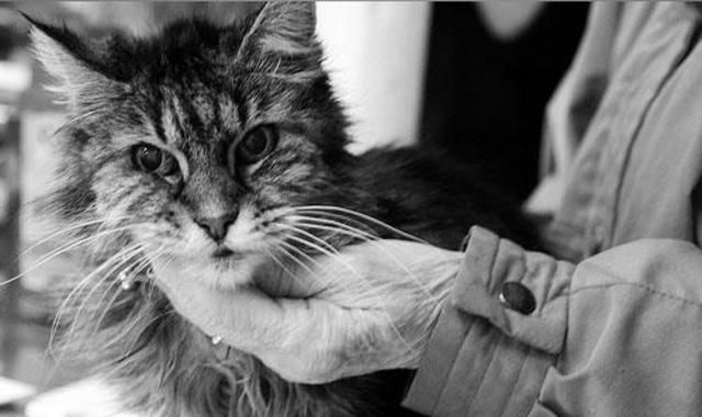 Homeless and pet owners get free vet care from
