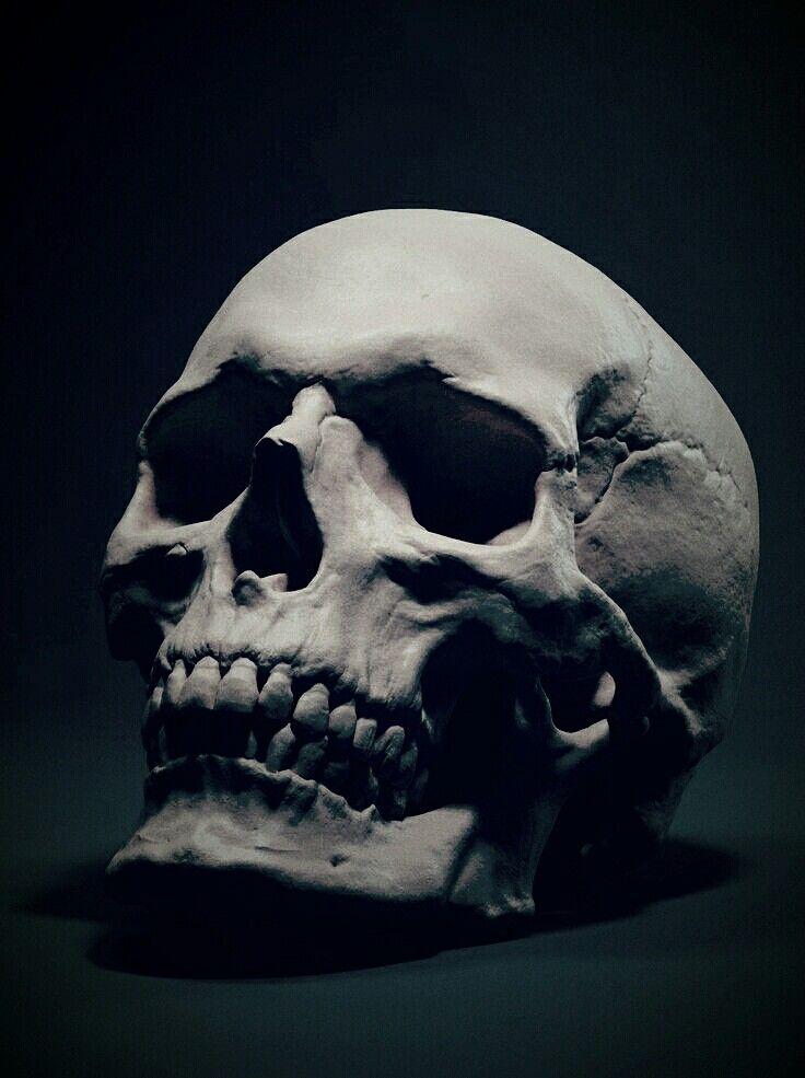 Human Jaw Tattoo: Skull, Skull Reference Y Skull