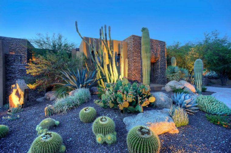 Cactus et plantes grasses extérieur pour un jardin facile à décorer ...