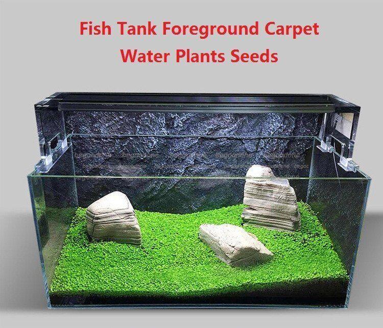 Details about 10g Mini Aquarium Tank Foreground Carpet Grass