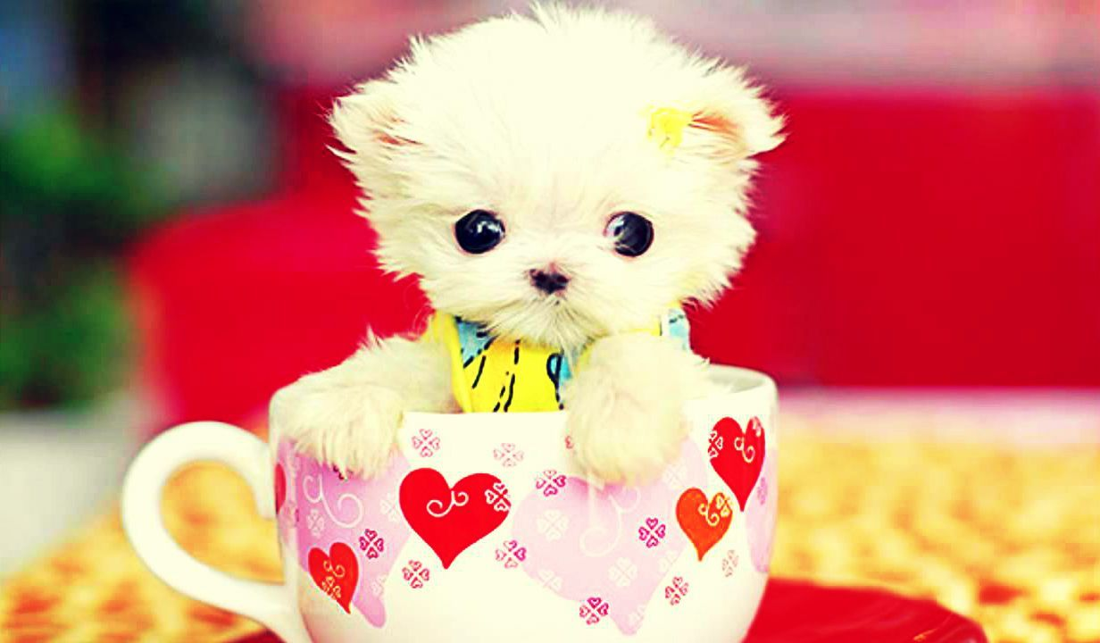 Cute hd images find best latest cute hd images in hd for your pc