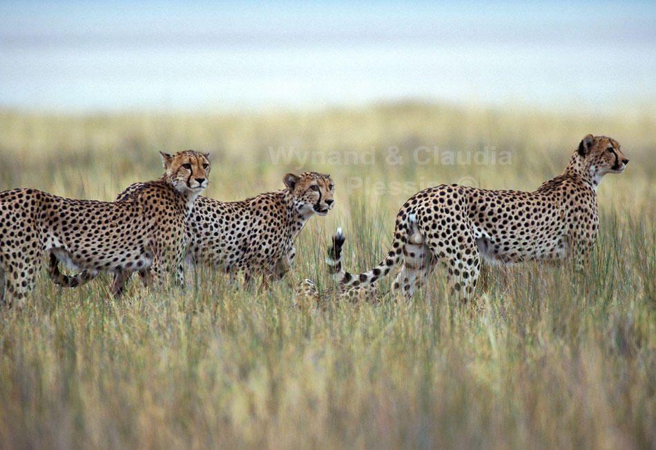 Wildlife photos of Namibia as Fine Art Prints, Wynand & Claudia