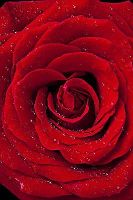 Red Rose With Dew Art Print by Garry Gay