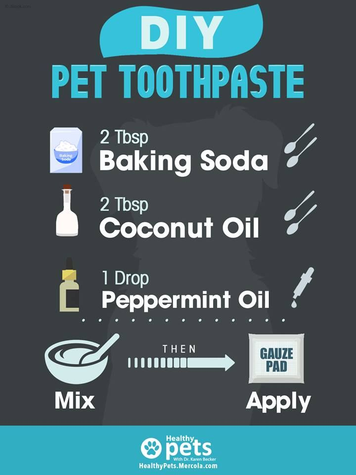 Diy dog tooth paste diy dog toothpaste dog toothpaste