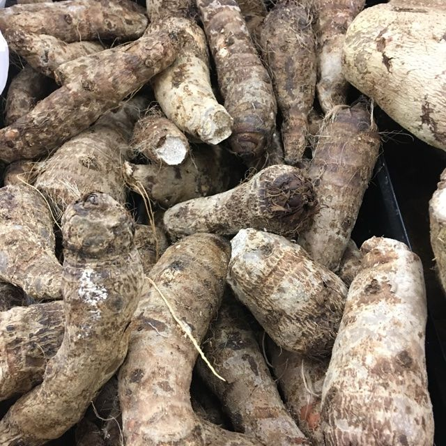 Malanga root may be a good grain substitute. | Healthy ...