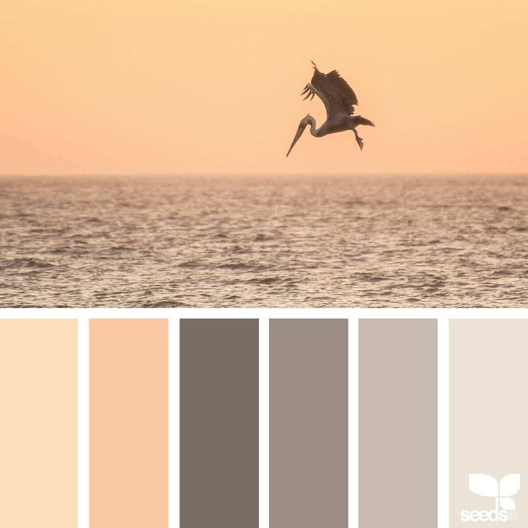 today's inspiration image for { creature color } is by @amandarimmerphotography ... thank you, Amanda, for sharing your wonderful photo in #SeedsColor !