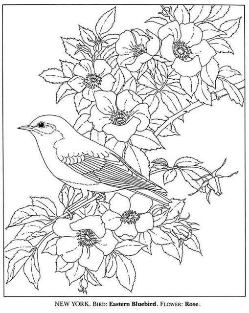 Cantinho da Vovó Canarinho e as flores Faith Pinterest Bird - new animal coloring pages with patterns