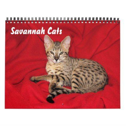 Serval Savannah Cat Calendar - cat cats kitten kitty pet love pussy