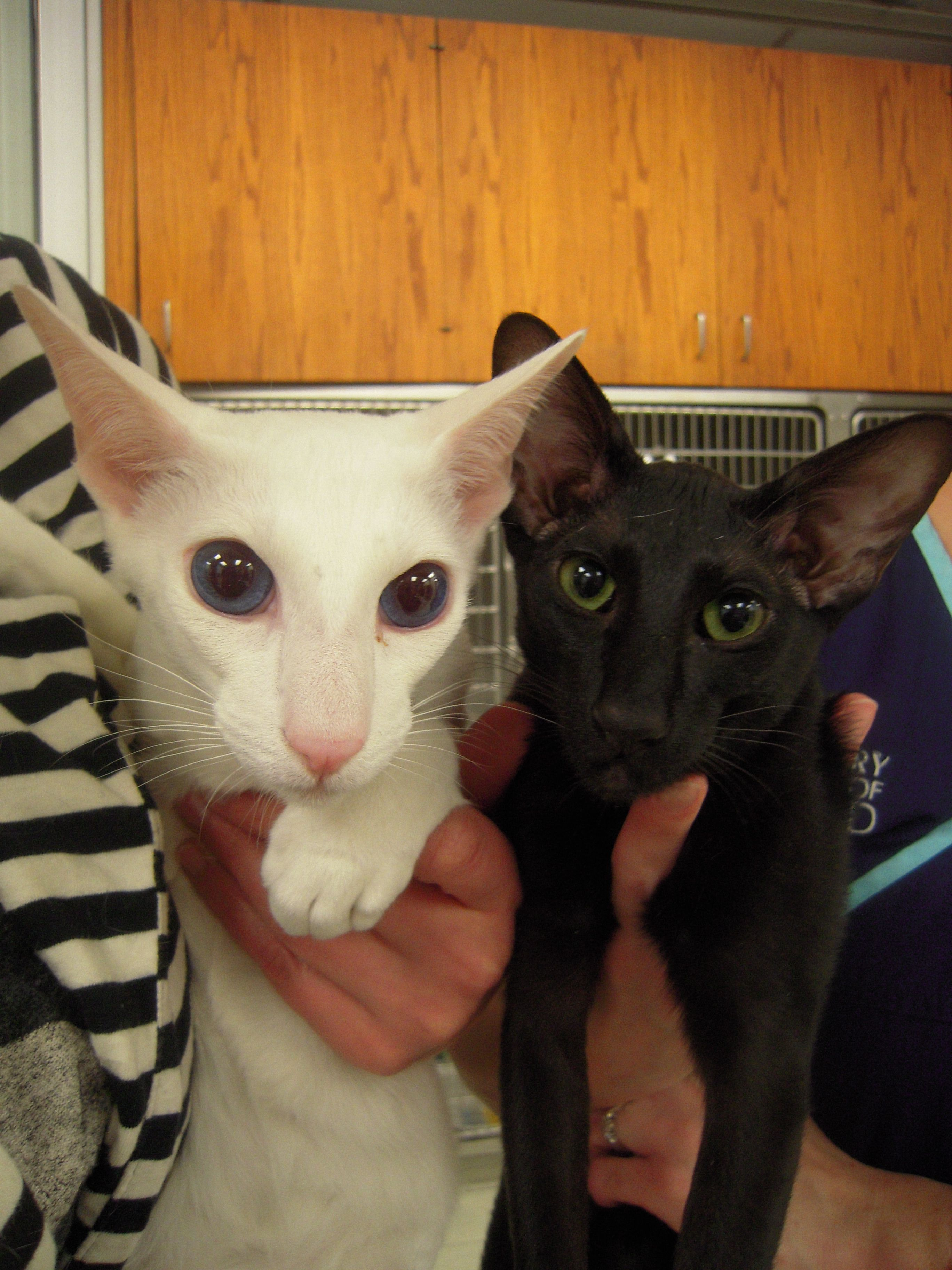 Sphynx cats Scamsters Is Cheating Cat Lovers By Selling Them