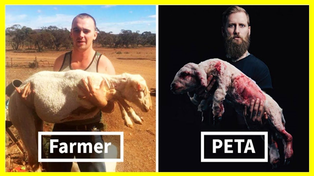 This Brutal Anti Peta Rant Is Going Viral And People Are Shocked To Lea Peta Animal Rights Organizations Hypocrisy