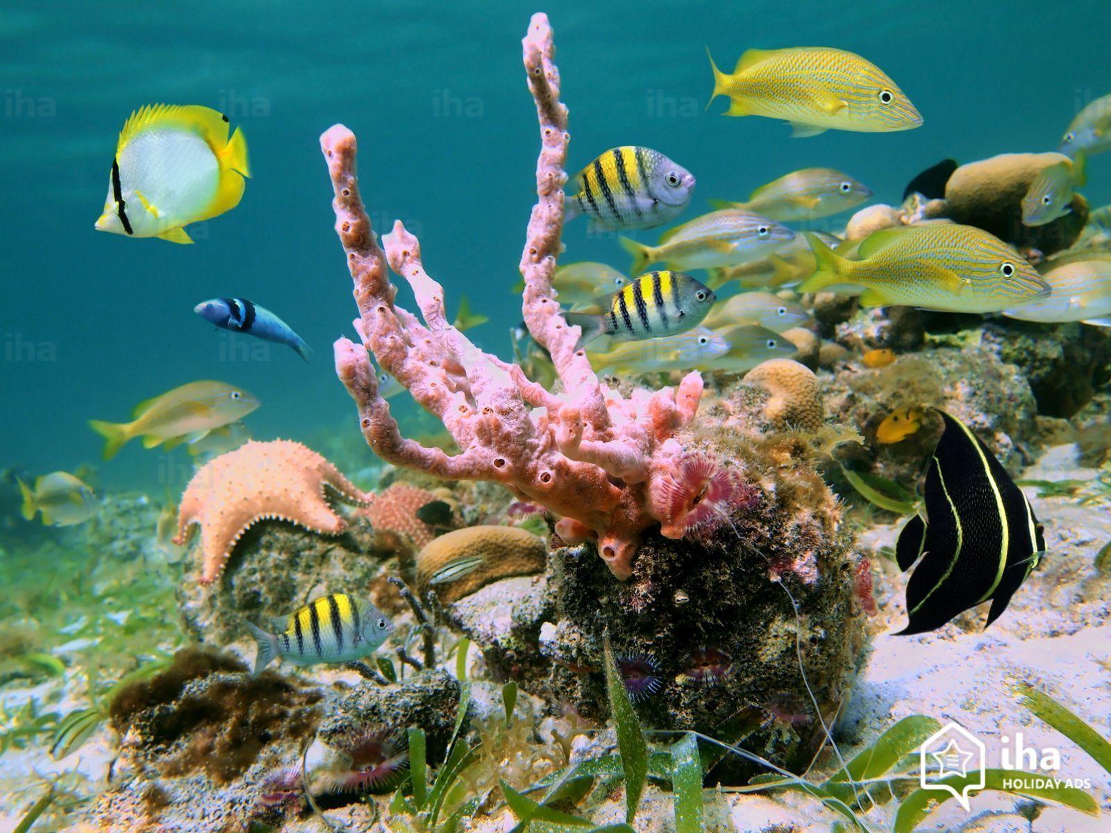 https://s.iha.com/00113149746/San-martin-parte-holandesa-Vida-del-mar-caribe.jpeg