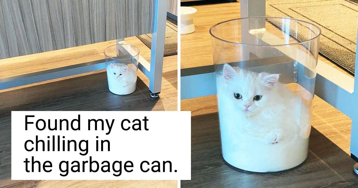 16 Reddit Users Who Forgot The Word Boredom When They Got Themselves A Cat Living With Cats Boredom Cat Snacks