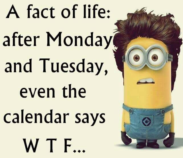 Minion Monday Quotes: HAPPY MINION MONDAY EVERYBODY!!!!!!!!!!!!