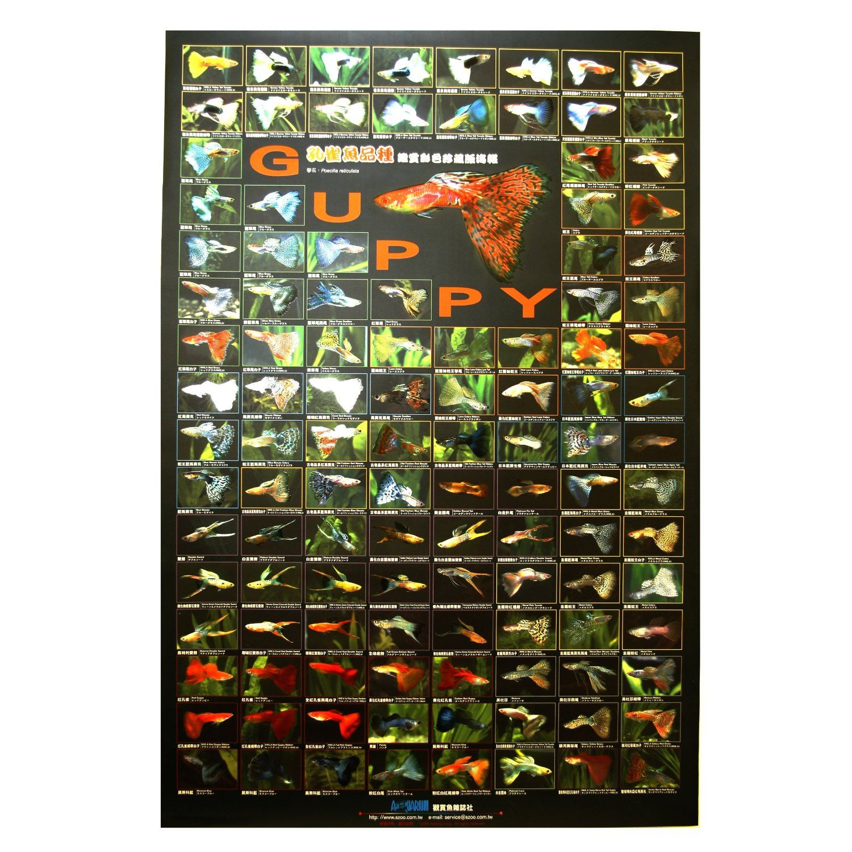Azoo aquarium decor guppy poster pet supplies for Fish and more pet store