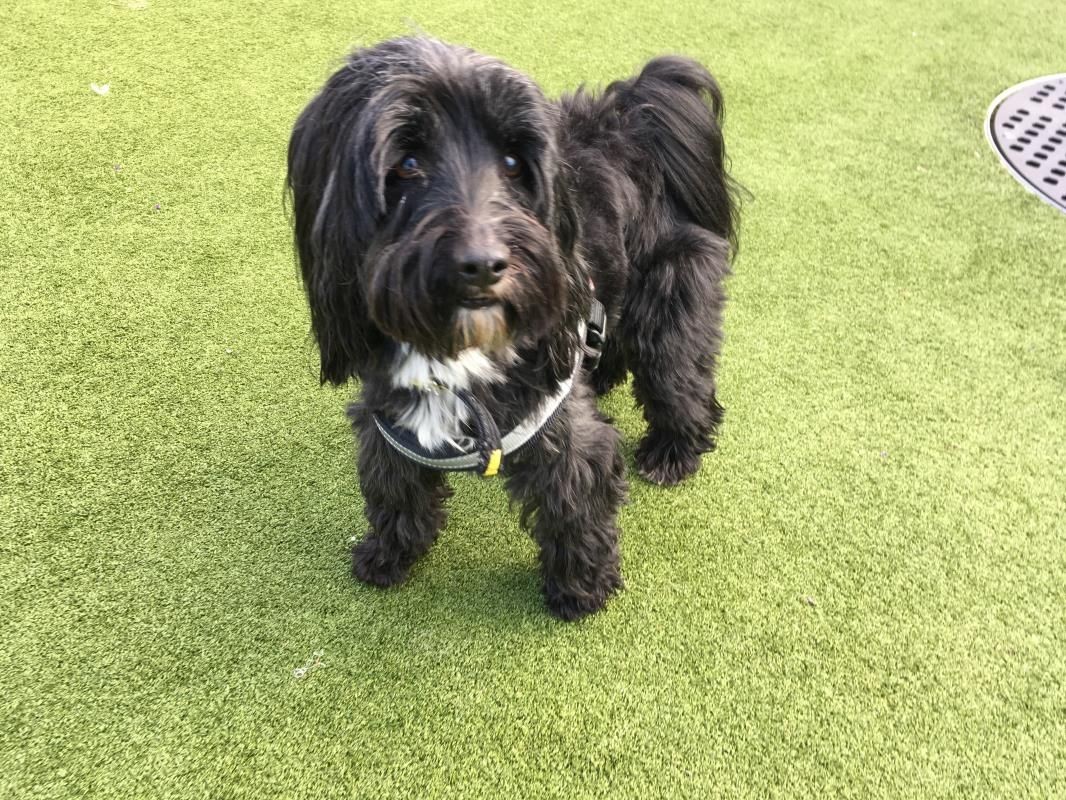 Tashi Dogs Dogs Trust Terrier