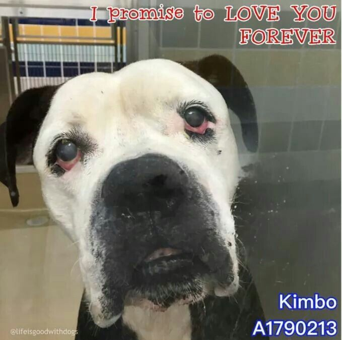 Bravo is at Miami Dade cty shelter