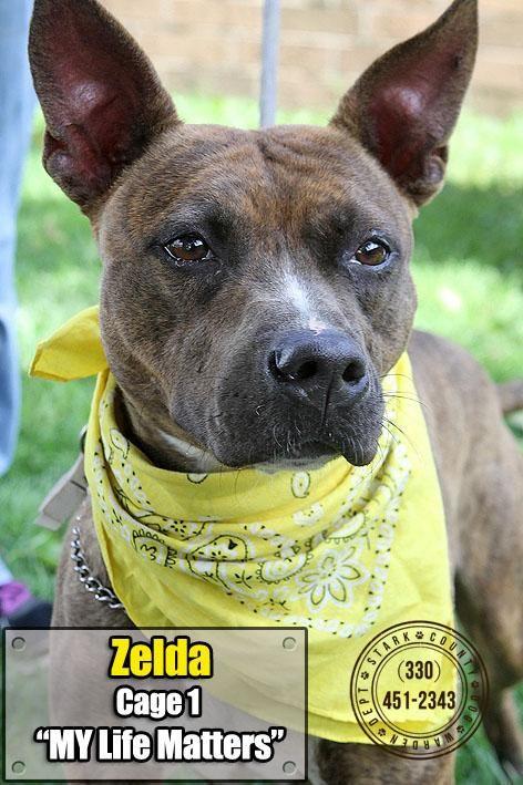 Adopt Iso 1 Zelda Adopted On Petfinder Adoption No Kill Animal Shelter Dogs