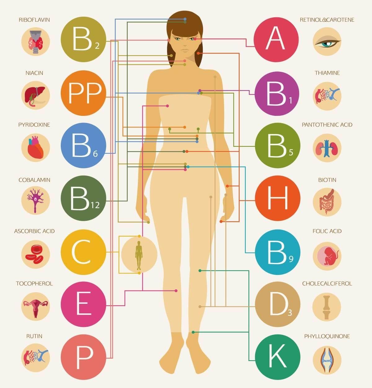 Funktion Der Vitamine Im Menschlichen K 246 Rper Di 228 T