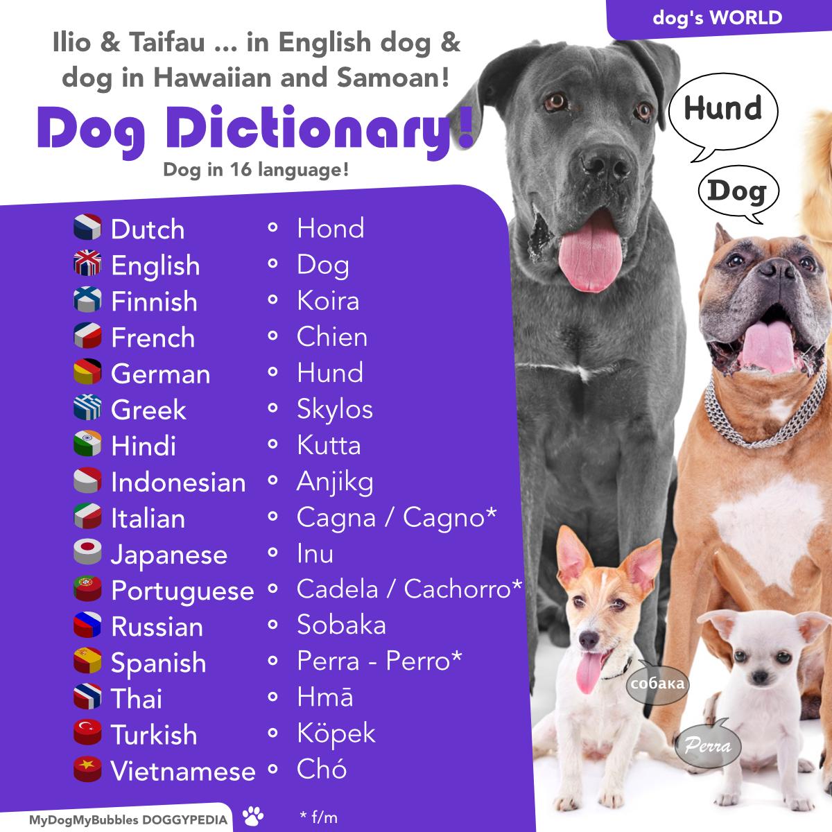 Dog Dictionary English Dogs Dogs Dog Language