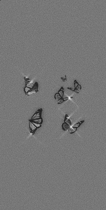 Black&White Butterfly