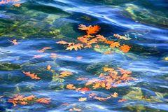 Fogli della quercia di autunno che galleggiano sull'acqua Immagine Stock Libera da Diritti