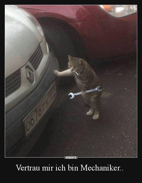 Beste Bilder Videos und Sprüche und es gibt täglich neue lustige FacebookBilder auf DEBESTEDE Witze und Sprüche werden hier jeden Tag gepostet  Katzen