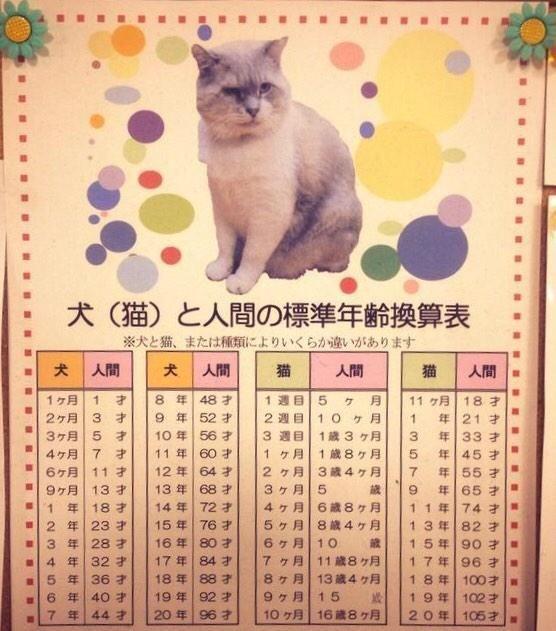 人間年齢にすると何歳になる 犬と猫の年齢換算表 画像 Corobuzz 猫 犬 犬 年齢