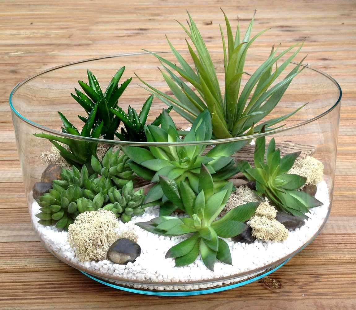 Terrarium plantes grasses artificielles h13 d26 brice for Plante artificielle jardin
