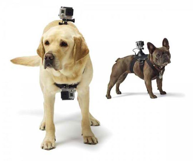 Gopro Dog Harness See What S It Like To Run Jump Swim Chase