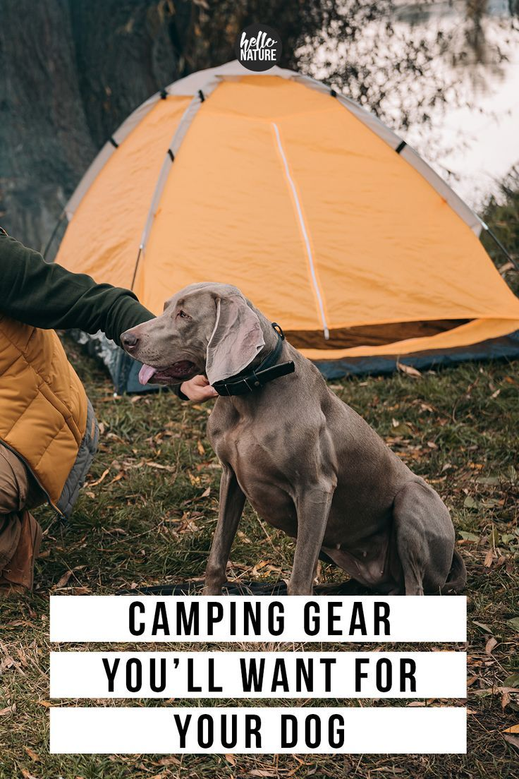 Photo of Must-Have Camping Essentials for Dogs