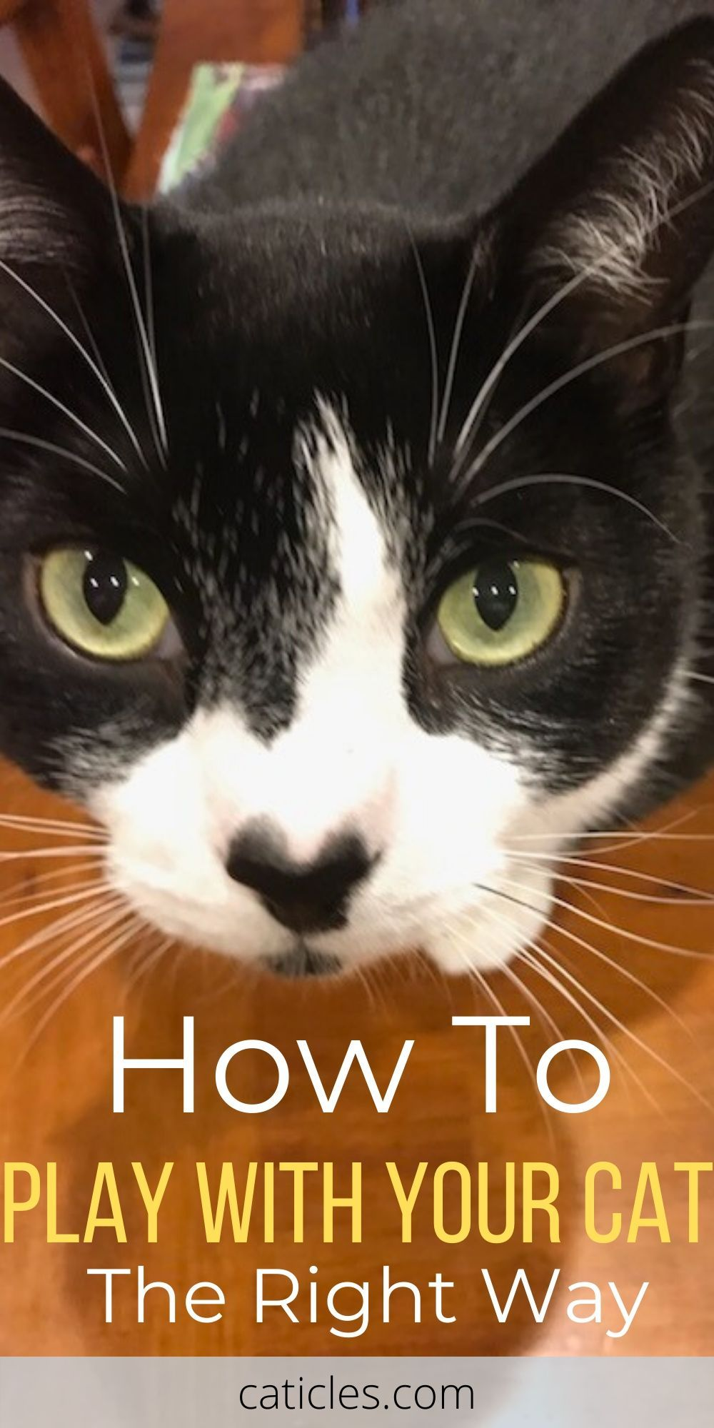 My Cat Isn T Interested In Playing Try These 9 Simple Hacks Caticles In 2020 Cats Cat Care Interactive Cat Toys