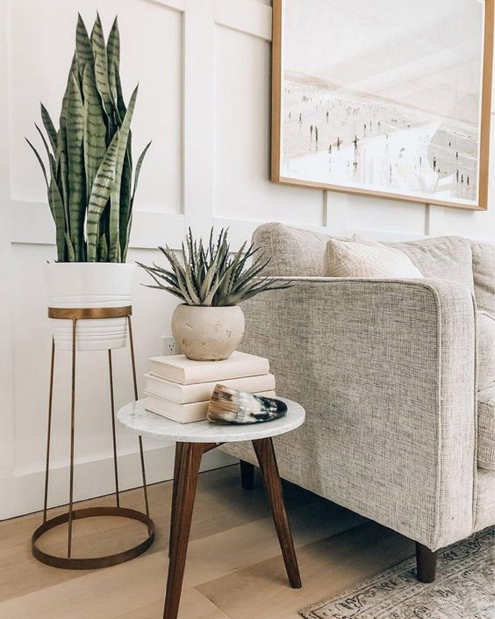 Piante da Appartamento - Le Mie 7 Preferite ⋆ Debora ...