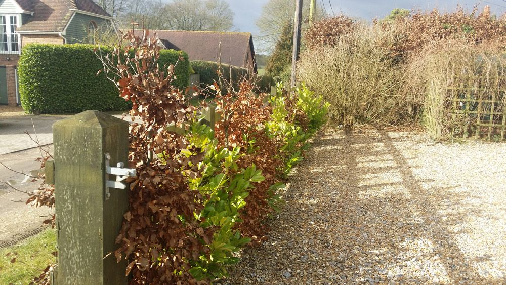 If you're thinking of planting a new beech hedge, or maybe Hornbeam I think you'll find this post useful. I've planted several hedges over the years and learned some useful stuff …