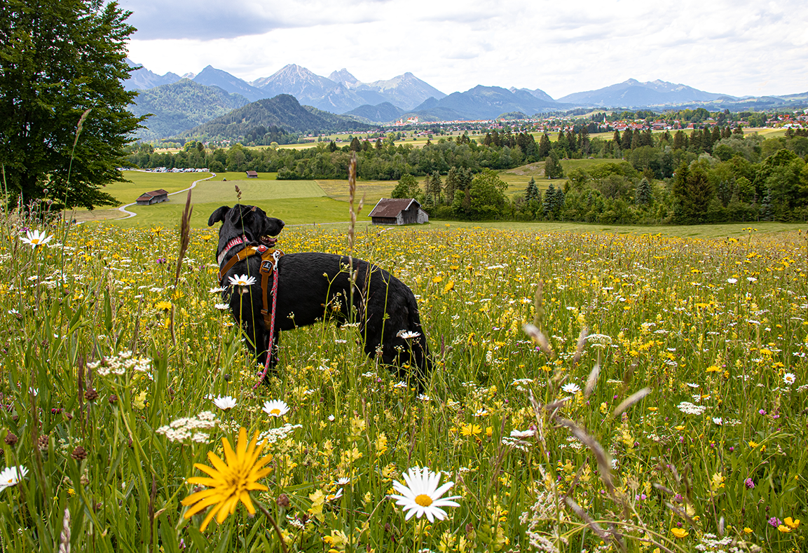 Der Schutzengelweg In Schwangau Die Bergfreaks Bergurlaub Mit Hund In 2020 Urlaub Mit Hund Neuschwanstein Reiseziele