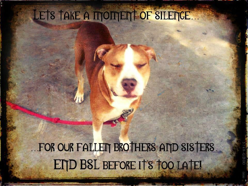 End BSL !!