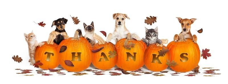 Thanksgiving Dogs And Cats With Falling Leaves Thanksgiving Pet Web Banner Bann Sponsored Falling In 2020 With Images Dog Thanksgiving Pet Security Cute Puppies And Kittens